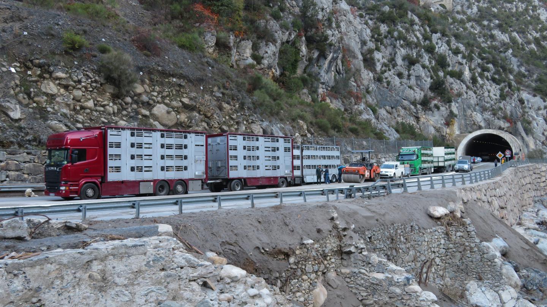 Les brebis sont transportées dans des camions remorques spécialisés dans le transport d'ovins.