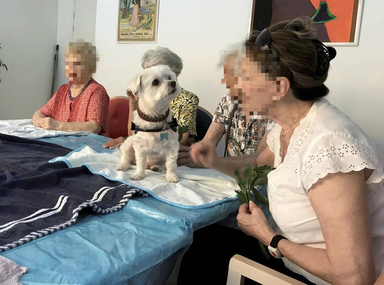 France Alzheimer 06 anime un accueil de jour avec une multitude d'activités à l'Institut Claude Pompidou de Nice.