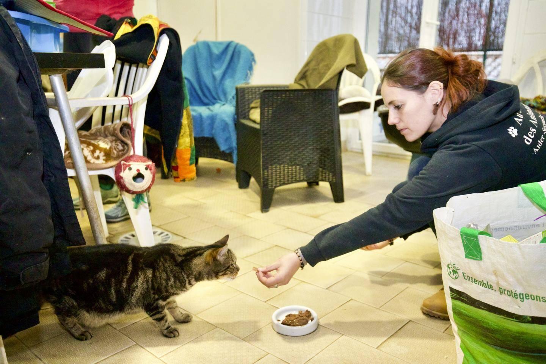 Les chats et l'équipe d'ASA 06 apprennent à se connaître alors que l'association fait son entrée dans les lieux en ce 1er janvier 2021.