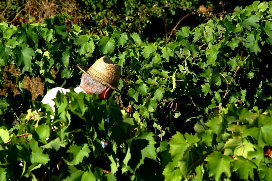 Le travail dans les vignes (photo d'illustration).