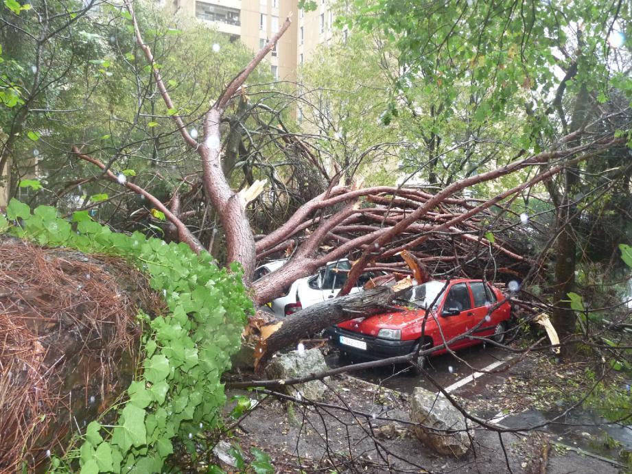 Quatre voitures ont été prises au piège par la chute de cet arbre de plus de vingt mètres.(Photos Emmanuelle Pouquet)