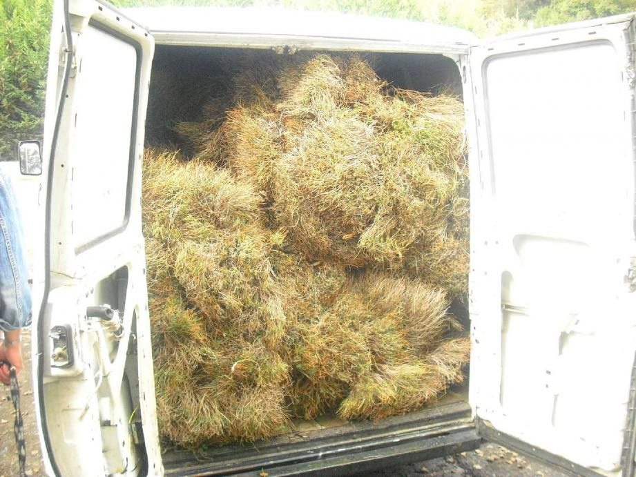 Le véhicule rempli d'Euphorbia Spinosa a été saisi par la justice.(Photos DR)