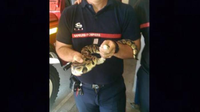 python beausset 150807
