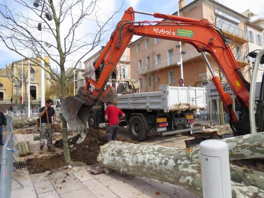 De jeunes arbres adultes prennent place.