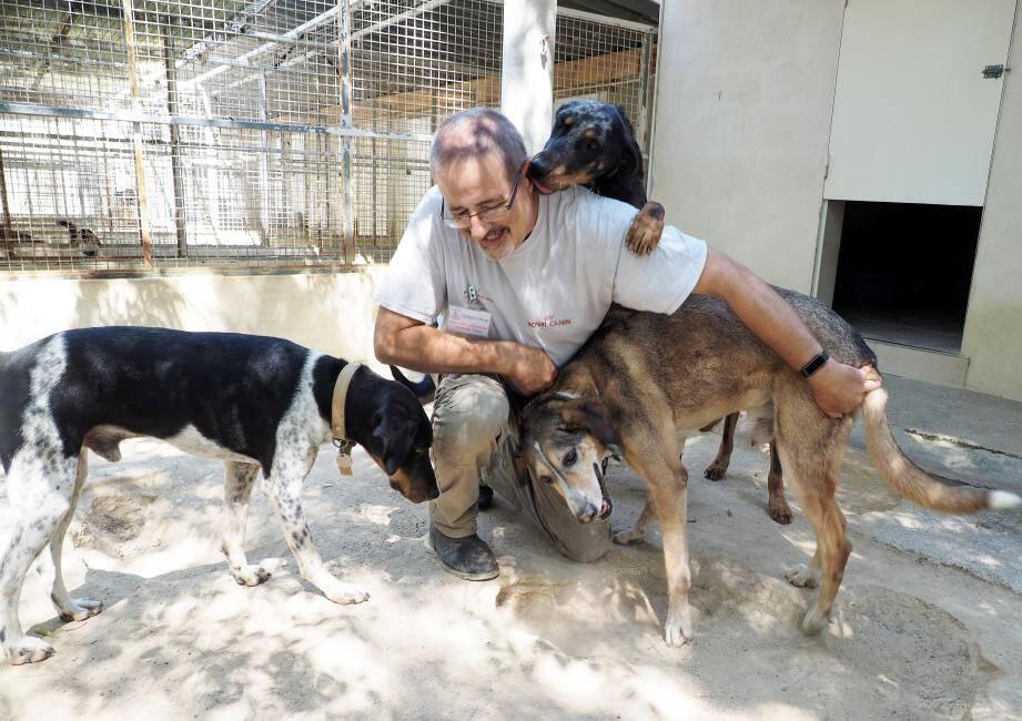 Cet été, seuls vingt chats et deux chiens ont été adoptés.