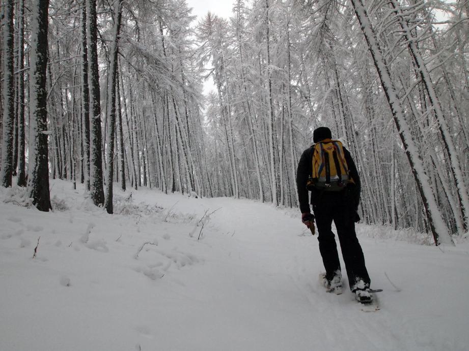 Des airs de forêt sibériennes... qui s'illuminent dès les premiers rayons de soleil...