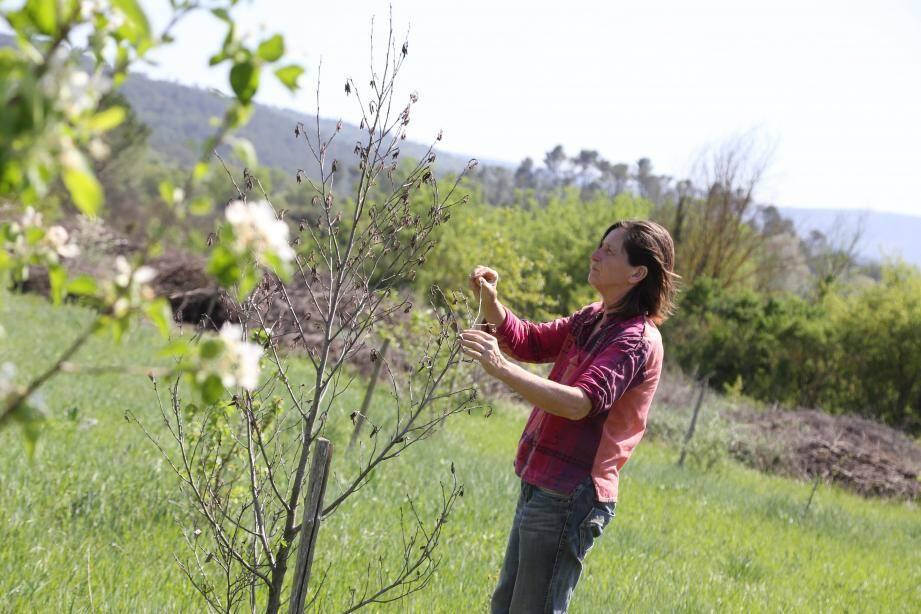 L'agricultrice plante des arbres pour soigner le sol d'un ancien champ de vignes.