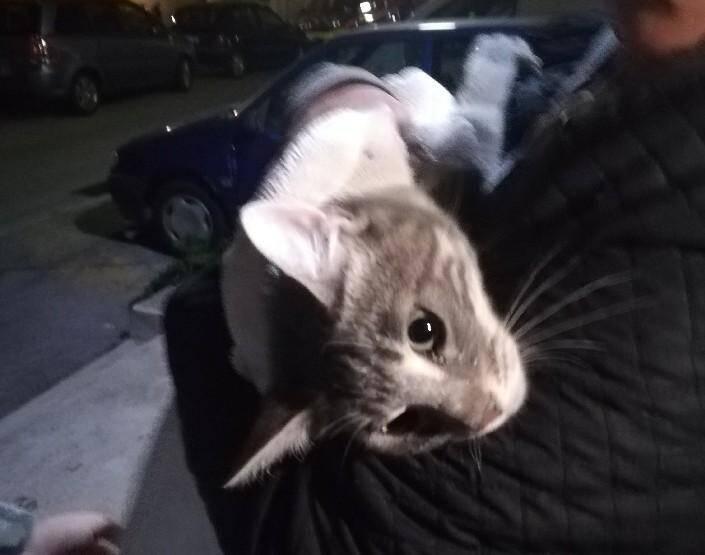 Le chaton a été secouru sain et sauf.