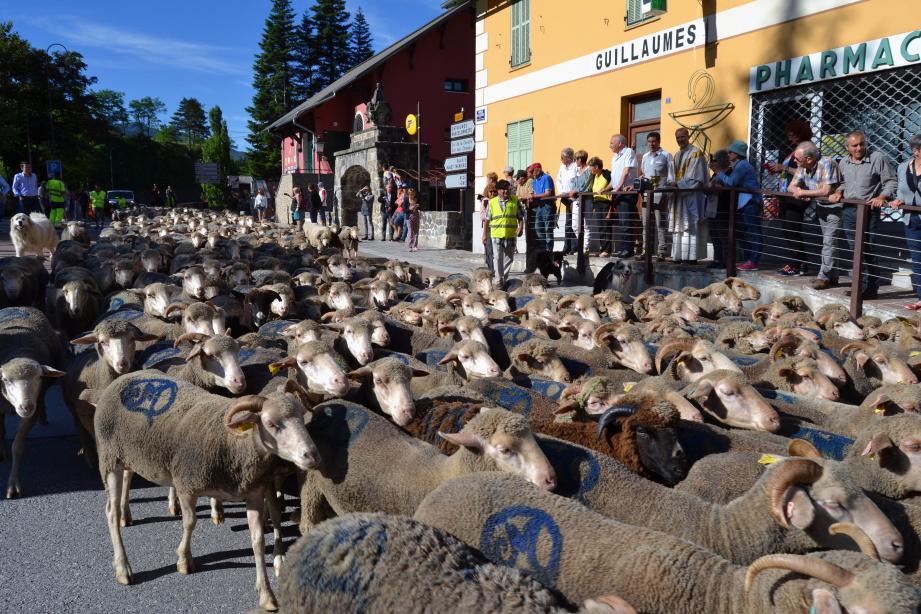 La bénédiction du troupeau.