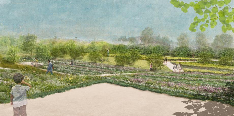 Une vue des futures restanques du bas du parc. Une végétation peu consommatrice en eau.(Dessin de l'Atelier Amarante)
