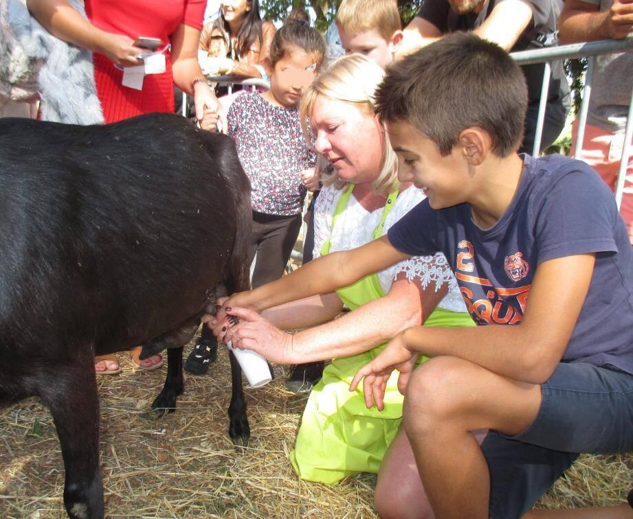 Enzo, 10 ans, s'est laissé convaincre de traire la chèvre, mais il n'a pas trop aimé le goût, « surprenant » pour lui, de son lait.