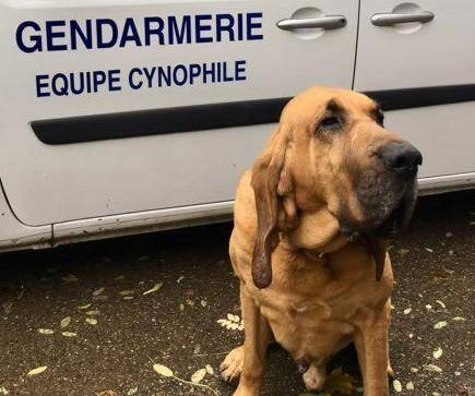 Le major Bruno et son chien Jupiter sont en alerte permanente