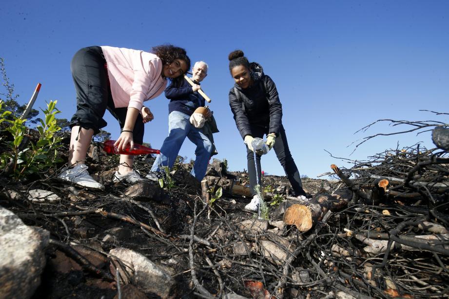 3.000 plants ont été enfouis dans les sols nettoyés.