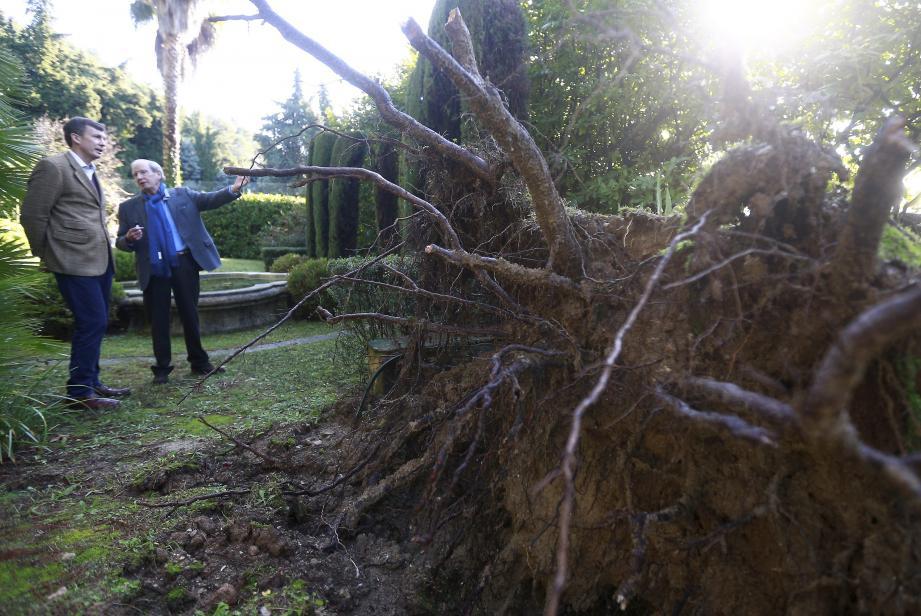 Chemin des Fumerates à Saint-Paul-de-Vence, un pin s'est effondré sur la route.