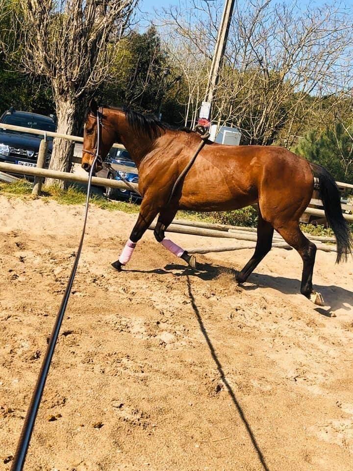 Malgré le confinement des cavaliers, les chevaux sont sortis régulièrement.