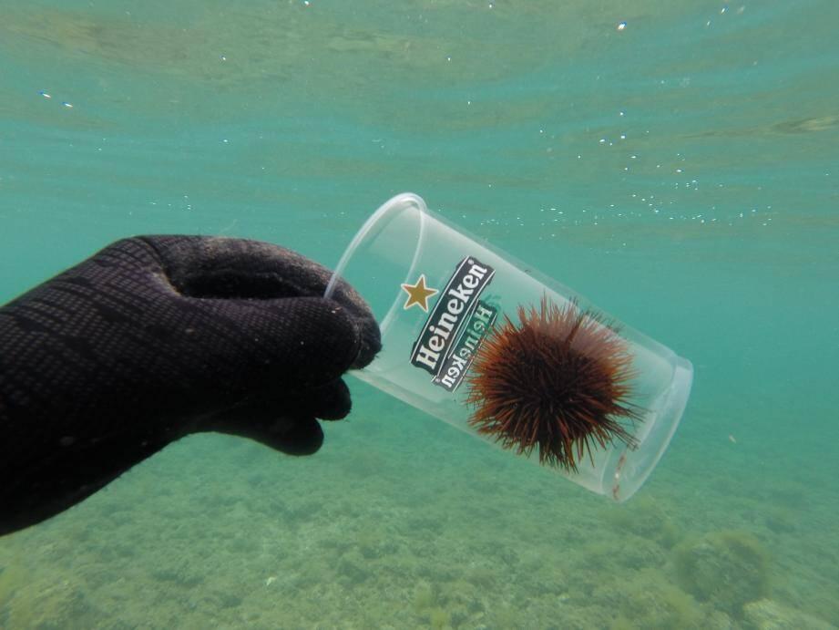 Le plongeur cannois de l'association Opération Mer Propre constate le drame qui se joue dans nos fonds lorsque la faune rencontre notre pollution.
