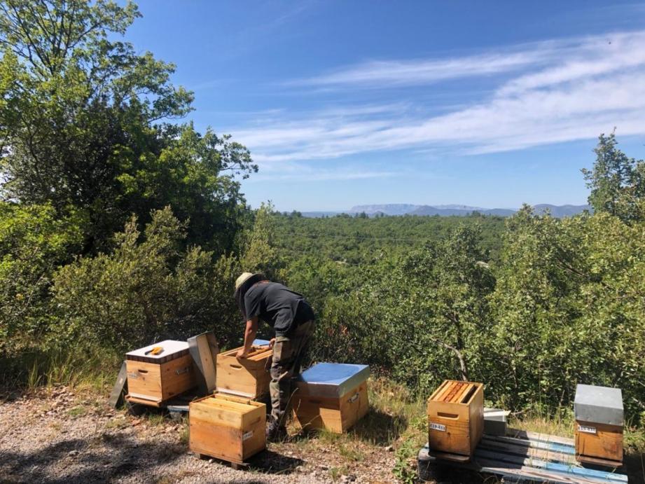 Les élèves de la Bee academy seront suivis jusqu'à la création de leur entreprise.