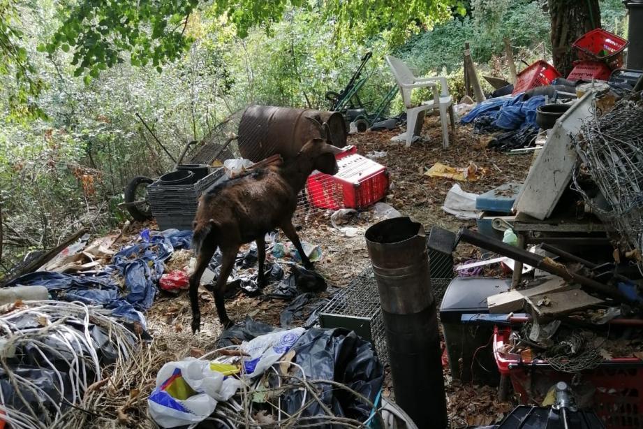 Les rescapés vivaient au milieu des puces, des cadavres et des immondices.