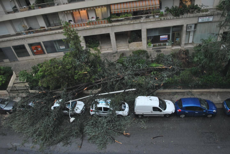 Un arbre affalé sur des voitures en stationnement, quartier du Parc Impérial à Nice.
