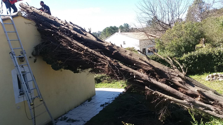 Un cyprès déraciné tombe sur une maison à Peymeinade.