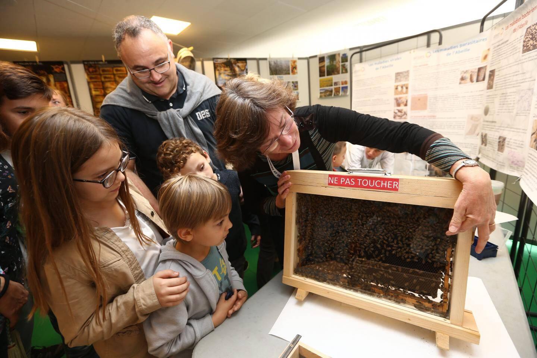 La vie des abeilles, au sein même de la ruche, fascine les petits comme les grands.