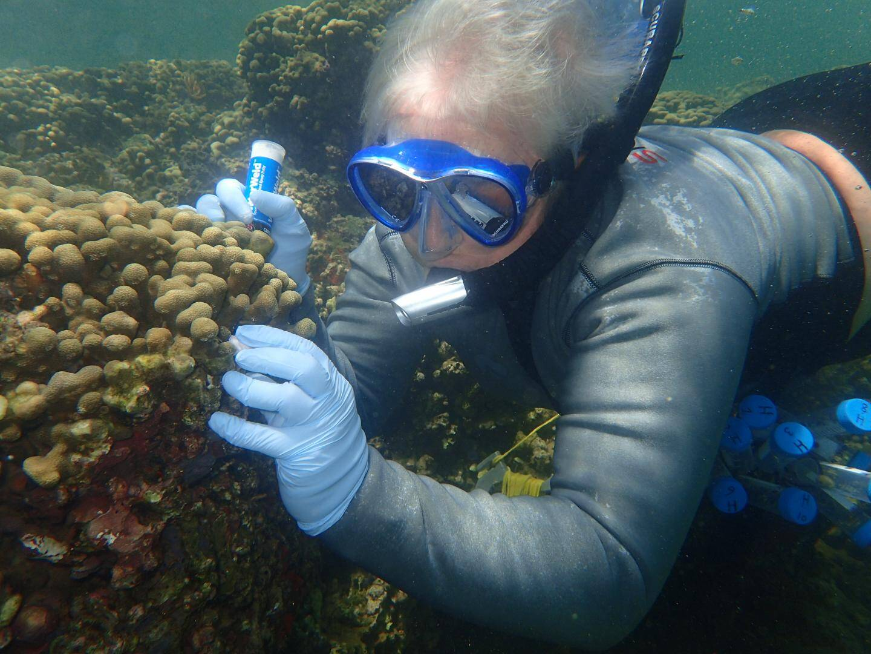 Dorota Czerucka a participé à la collecte : ici elle panse les plaies du corail avec une résine pour éviter d'éventuelles maladies.