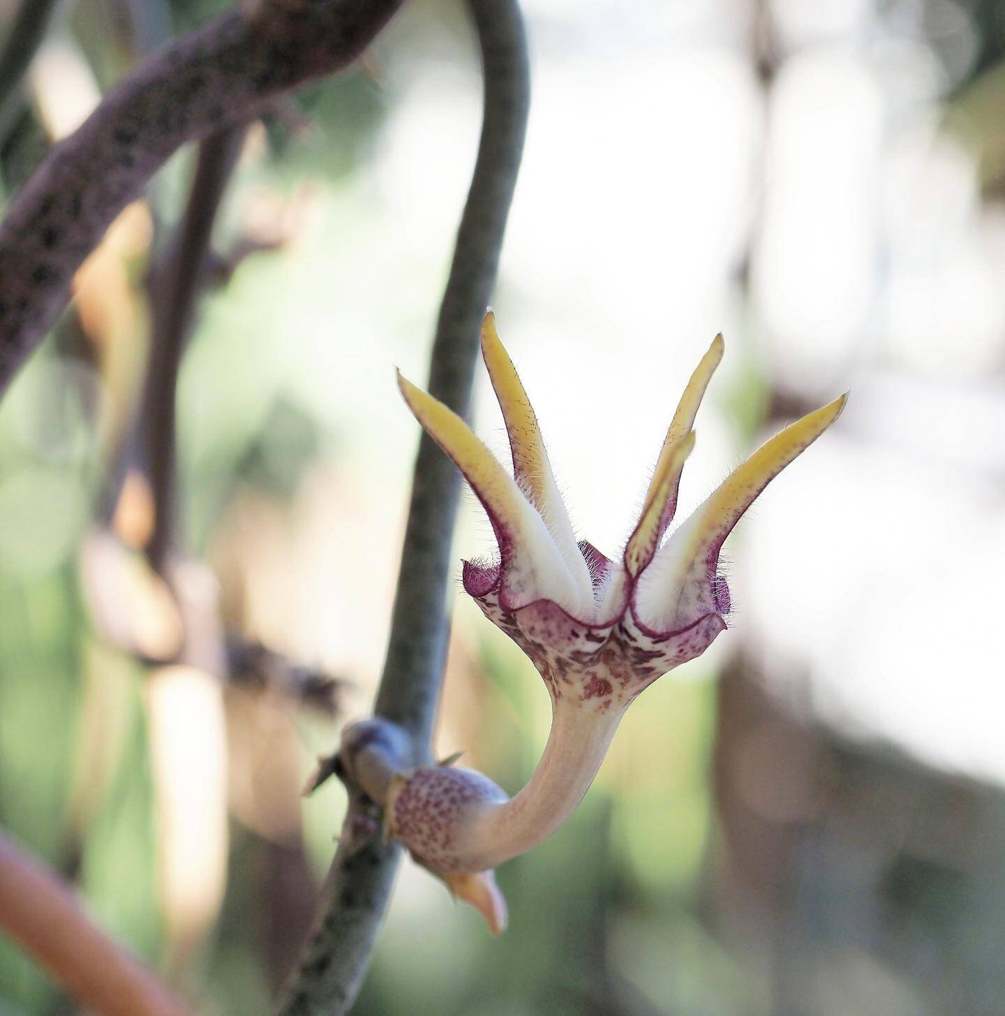 Les fleurs des plantes succulentes ont des apparences très diverses.