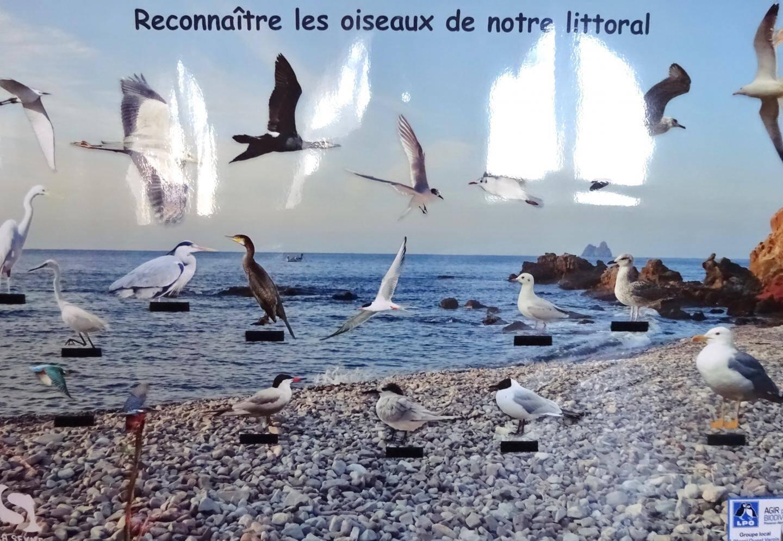 Plusieurs outils ont permis l'identification des espèces littorales.