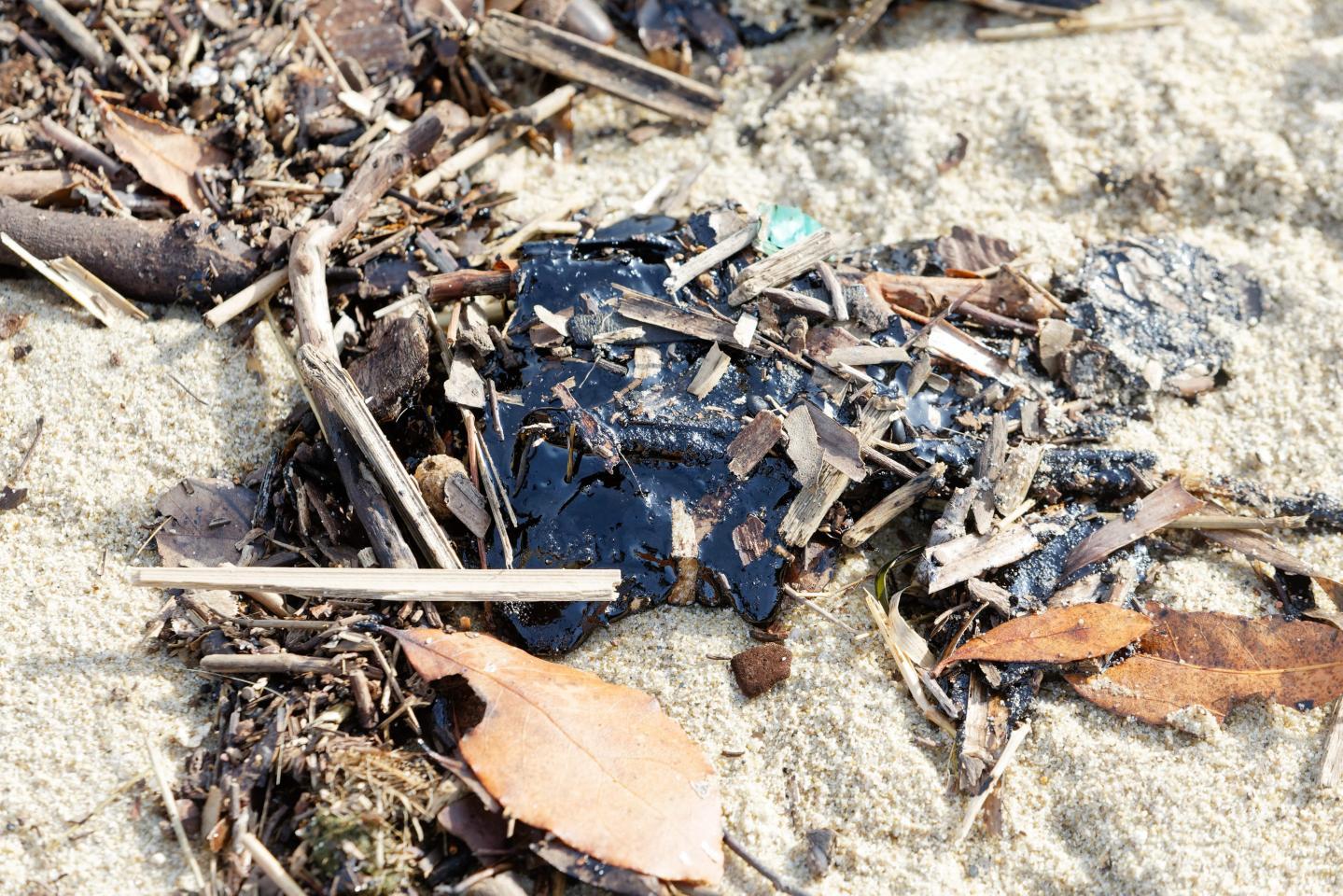 Le nettoyage des plages se fera entre avril et mai.