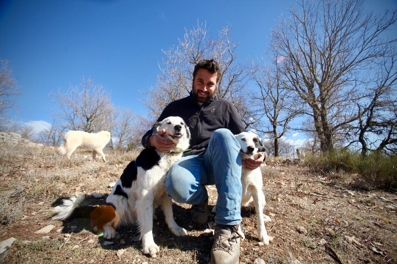 Guillaume avec Maya et Lola, ses deux Border Collie qui conduisent le troupeau.