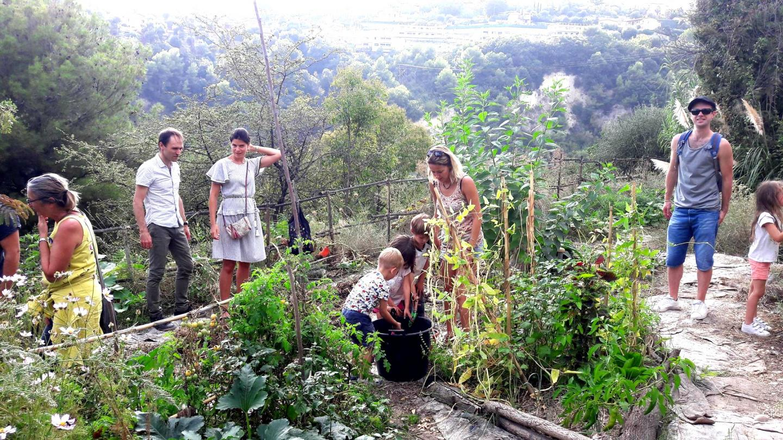 Le potager en permaculture où poussent, fèves, blettes, fleurs comestibles...