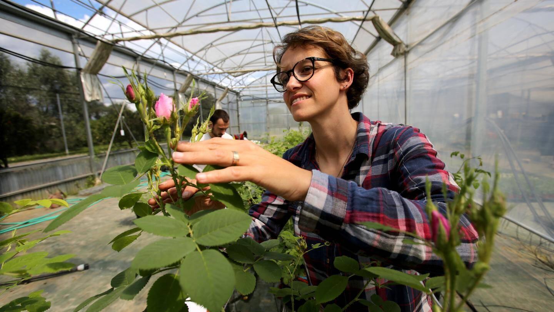 """Justine Lipuma: """"on a deux fois plus de roses par pied, sur les plants mycorhizés."""""""