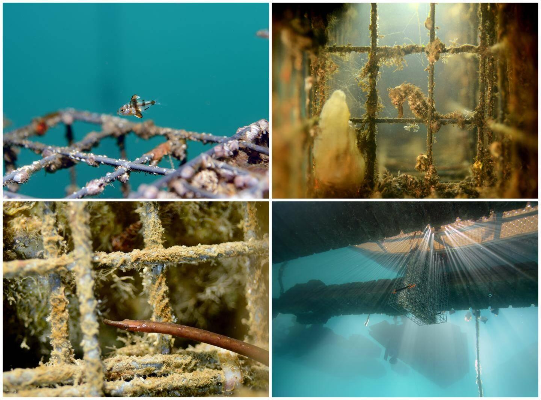 """Les """"biohut"""" d'Ecocean ont été conçus pour """"offrir le gîte et le couvert"""" aux bébés poissons jusqu'à ce qu'ils soient en mesure de rejoindre le large."""