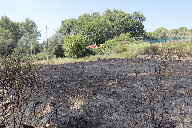 La végétation est partie en fumée, ravagée par des flammes allant jusqu'à 15 mètres de haut.