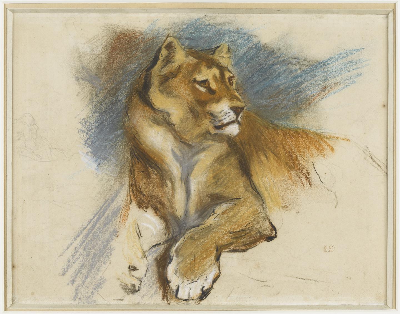 Étude d'Eugène Delacroix au pastel d'une lionne au repos.