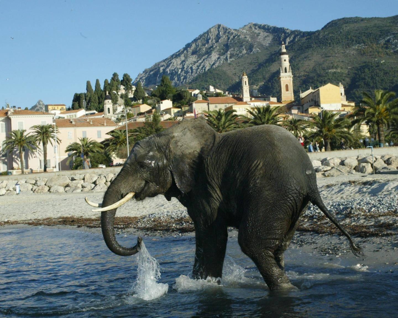 Suzi, l'éléphant des animations de fin d'année sur le thème de l'Arche de Noël.