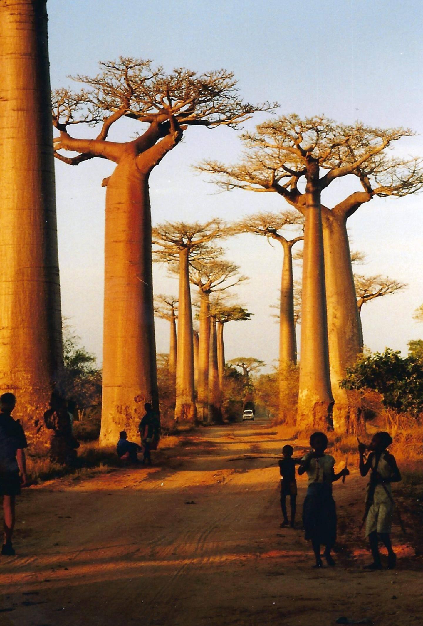 « Les baobabs » de Christiane Micquel (9e place).