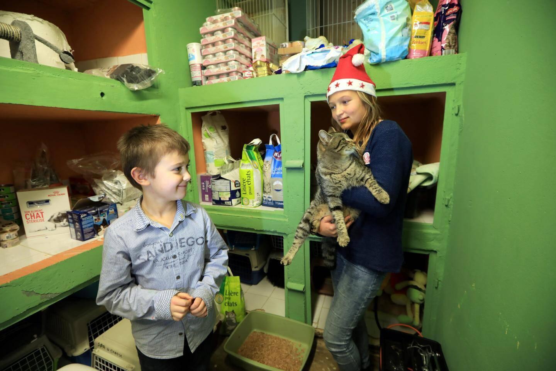 Mathilde et Nicolas sont comme des poissons dans l'eau au Refuge de l'espoirà Mougins. Ils adorent câliner les animaux.