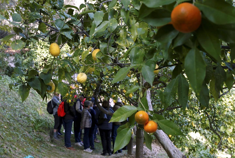 Derrière les plantations d'agrumes, les visiteurs écoutent attentivement l'histoire de la Citronneraie.