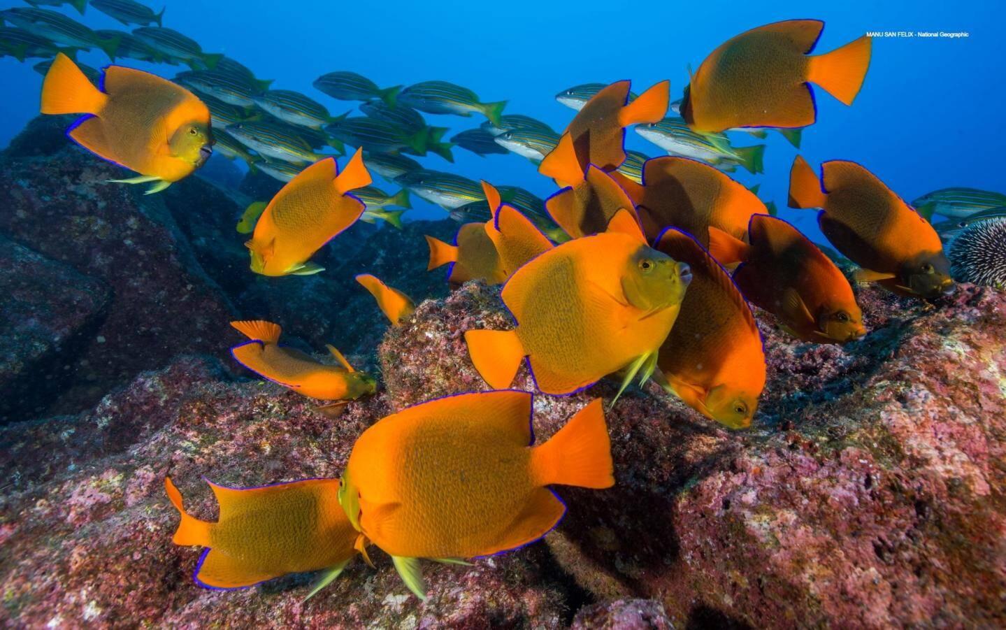 Les poissons des récifs coraliens