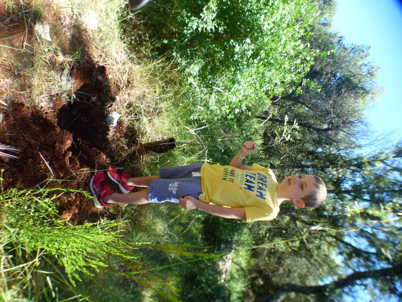 Un pied de frêne, tout juste sorti de son pot, et prêt à rejoindre la terre ferme.