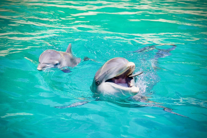 En mai dernier, le parc a enregistré les naissances de deux delphineaux, Lùa et Ollie.