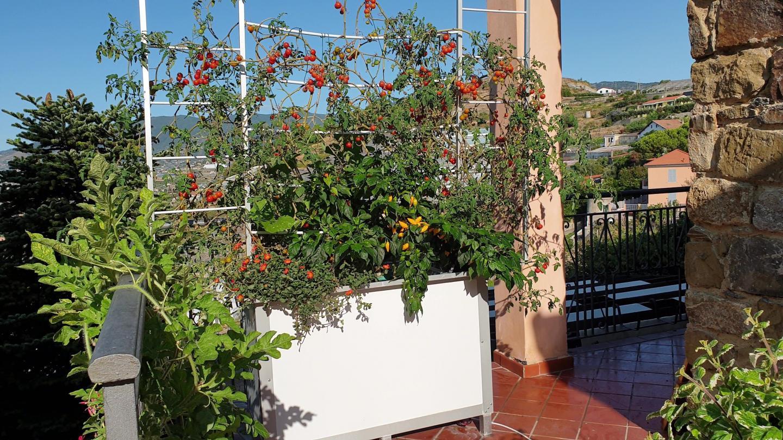 Dans la même jardinière, tomates, poivrons, courges, fleurs poussent en opulence sur la toile d'araignée artificielle de Mea Plant.