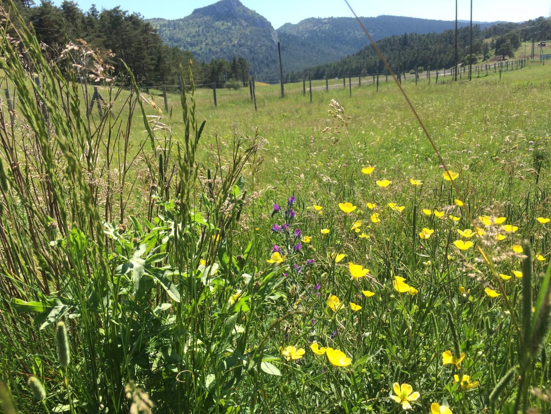 Une prairie dans laquelle, bisons et chevaux de Przewalski jouent le rôle de jardiniers.