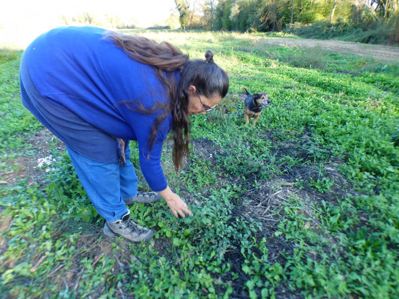 L'herboriste Sybille réalise un premier inventaire des plantes toxiques ou non.