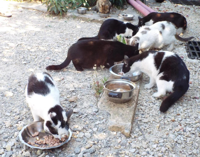 176 chats errants sont actuellement recensés dans la commune.