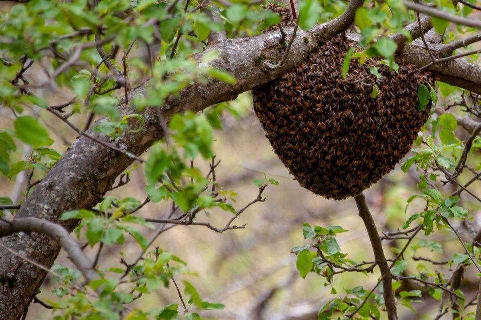 Les deux producteurs de miel ne reçoivent que très peu de soutien financier.