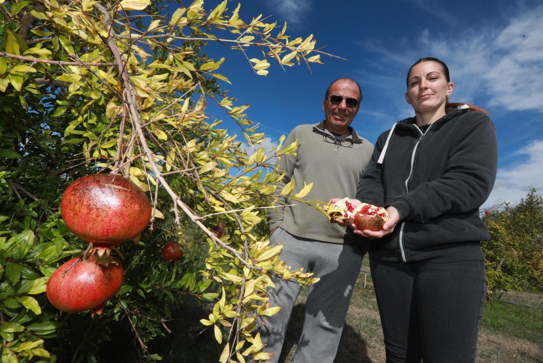 À Hyères, Patrick Artufel est passé des roses à la spiruline. Sa fille Audrey s'est lancée dans l'arboriculture, avec des agrumes, des grenadiers, de la stévia.