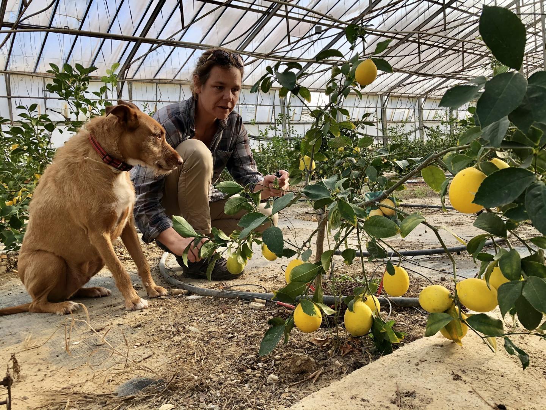 Joëlle Étienne (et son chien Gérard) devant des citrons Meyer.