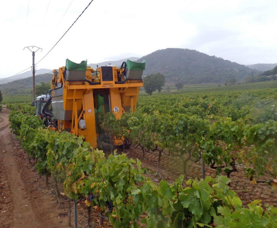 Pour assurer la récolte, Daniel Castellan passe plus d'un mois aux commandes de la machine à vendanger.